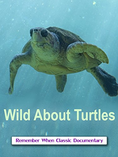 (Wild About - Turtles)