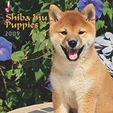 Shiba Inu Puppies 2009 7X7 Mini Wall Calendar