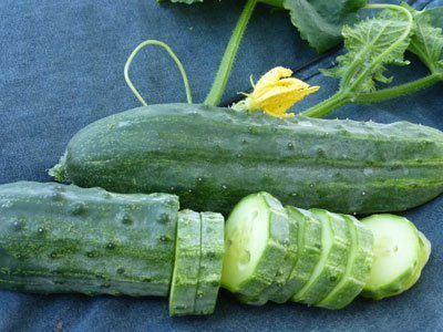 David's Garden Seeds Cucumber Slicing Spacemaster EB321Y (Green) 50 Organic Seeds