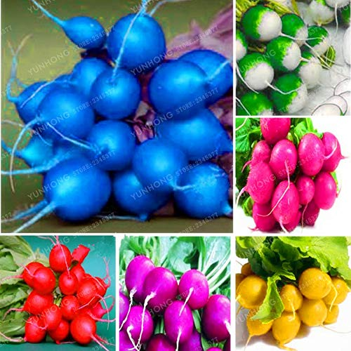 - Pinkdose Rare Rainbow Colour Cherry Belle Radish Bonsai 100% Real Bonsai Delicious Vegetable Bonsai Home Garden Plant Easy to Grow 50 Pcs: Mix