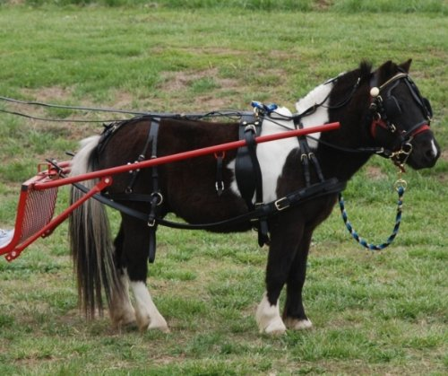 Frontier Leather Harness - Extra Heavy Duty Black Leather Mini Miniature Horse Drawn Harness