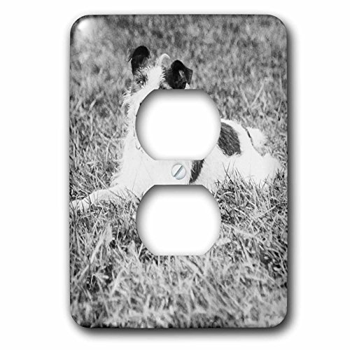 Scenes from the Past Magic Lantern - Vintage Terrier Called Terry Jack Russell Terrier Puppy Mix Circa 1910 - Light Switch Covers - 2 plug outlet cover (lsp_246046_6) (Puppy Terrier Mix)