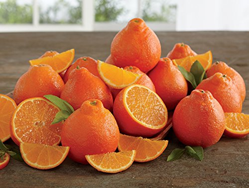 Rare Florida Honeybell Oranges Honeybell Tangelos Grove Fresh Four Trays, 40lbs by Florida Specialty