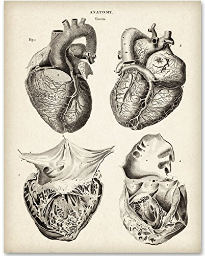 View Artwork - Anatomical Heart From 4 Views - 11x14 Unframed Art Print - Great Gift for Medical and Nursing Students