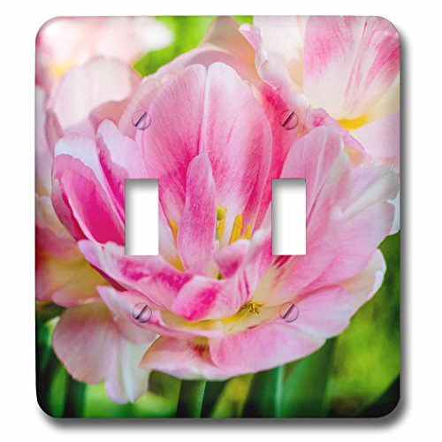 3dRose Alexis Photography - Flowers Tulip - Closeup view of pink parrot tulip - Light Switch Covers - double toggle switch (lsp_271823_2) (Double Parrot Tulip)