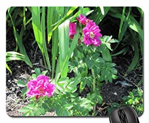Alberta Wild Roses in my garden Mouse Pad, Mousepad (Flowers Mouse Pad)