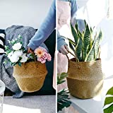 POTEY 710102 Seagrass Plant Basket - Hand Woven