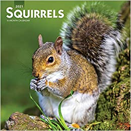 Squirrels 2021 12 x 12 Inch Monthly Square Wall Calendar, Wildlife