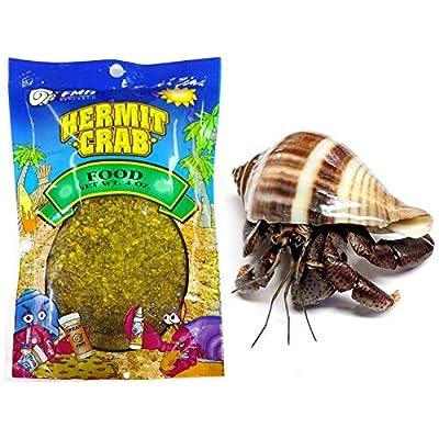 Nature Gift Store 1 Live Pet Hermit Crab+4oz Food Bundle: Purple Pincher Land Crab: Toys & Games