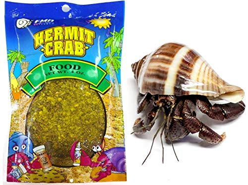 Nature Gift Store 1 Live Pet Hermit Crab+4oz Food Bundle: Purple Pincher Land Crab