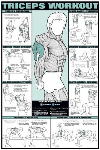 Triceps Workout 24quot X 36quot Laminated Chart