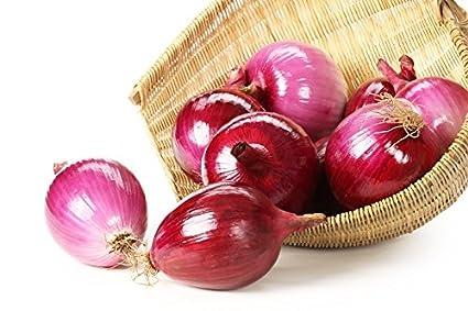 Semillas de cebolla roja - Allium cepa