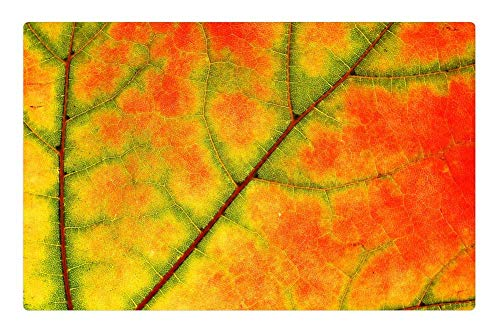 Indoor Floor Rug/Mat (23.6 x 15.7 Inch) - Sycamore Leaf Tree Nature Color Fall Maple ()