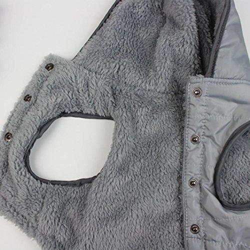 Jacket Costume Gris Pour chat Chien Chihuahua Petit Angelof Pull Chaud Hiver De Manteau Chandail Capuche Vetement Chien Habits xqUvwSvH