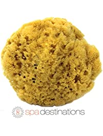 """100% Natural Sea Sponge 5-6"""" by Spa Destinations®Creating The In Home Spa Experience For the Perfect Bath or Shower..."""
