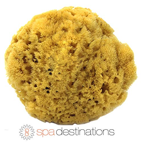 100% Natural Sea Sponge 5-6 by Spa Destinations®Creating The In Home Spa Experience For the Perfect Bath or Shower Experience.