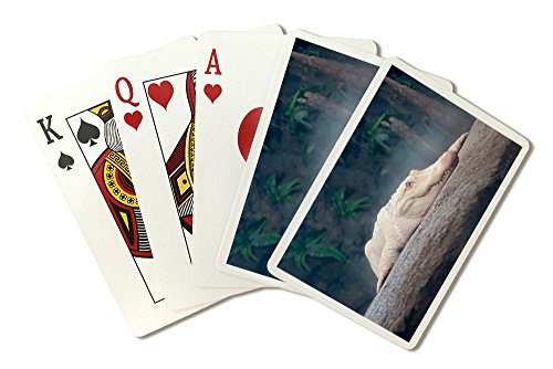 Albino Alligator (Playing Card Deck - 52 Card Poker Size with Jokers)