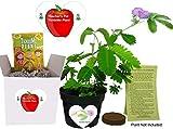 Gifts for Teachers- Show Appreciation - Pet...