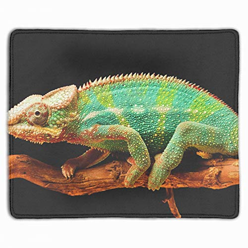 (Computer Chameleon Branch Flowers Tail Reptile Mouse Pad (11.8-inch by 9.85-inch), Printed Rubber Desk Accessories Mouse Mat)