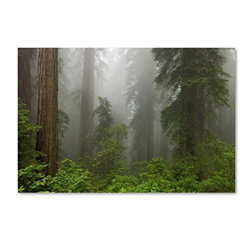 Jones Photo Art - Trademark Fine Art Redwoods NP Fog by Mike Jones Photo, 22x32-Inch Canvas Wall Art