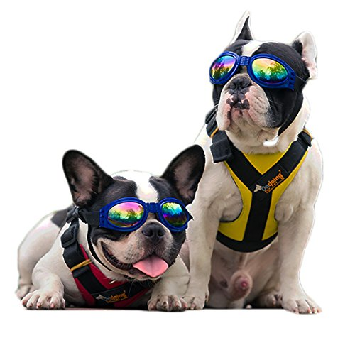 Doggles Goggles for Mid & Big Dogs from Perla & Gaius offer UV Protection Waterproof with Foldable Sunglasses Lenses, Polarized Sunglasses with Adjustable Strap - Are Of Of Glass Sunglasses Type Made This