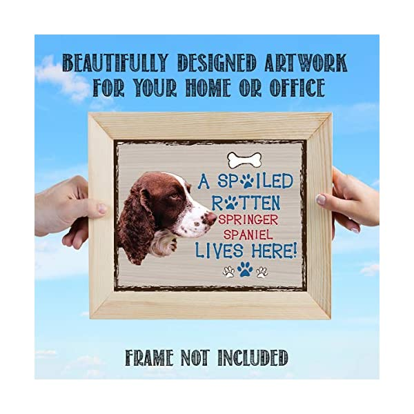 "Springer Spaniel-Dog Poster Print-10 x 8"" Wall Decor Sign-Ready To Frame.""A Spoiled Rotten Springer Spaniel Lives Here"". Pet Wall Art for Home-Kitchen-Garage. Gift-English Springer Spaniel Owners! 3"