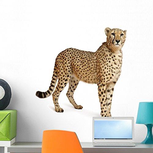 cheetah wall decals - 2