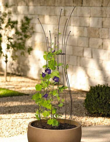 Gardener s Supply Company Decorative Metal Pot Trellis