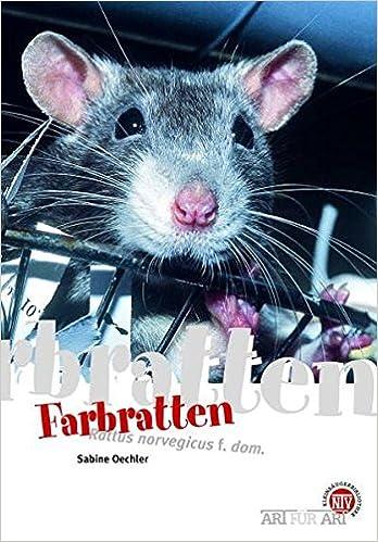 Dieses Bild anzeigen Farbratten: Rattus norvegicus f. dom. (Art für Art)