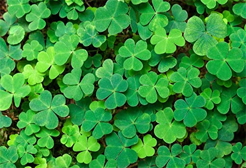AOFOTO 7x5ft Shamrock Backdrop for Photography Alive Spring March 17th Happy St.Patrick's Day Background Family Events Festival Celebration Party Portraits Shooting Vacation Backcloth Studio Prop ()