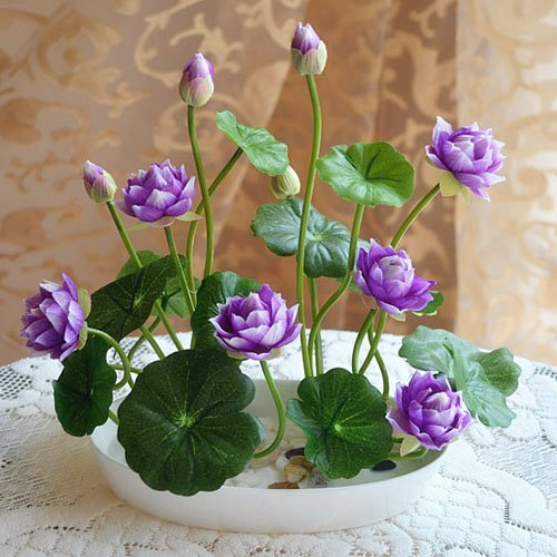 Bowl Lotus Purple, 10 Seeds