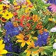 David's Garden Seeds Wildflower Butterfly Hummingbird Mix DGS30062A 500 Open Pollinated Seeds