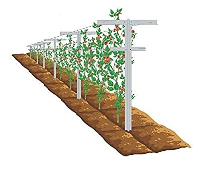 Mr.Garden Plant Trellis Raspberry Trellis with Arms