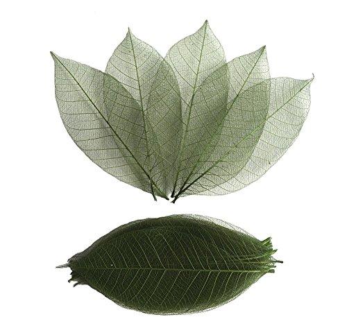 (RATREE SHOP Thai Handmade 100 Pcs Olive Green Skeleton Leaves Rubber Tree Natural Scrapbook Craft CARD Wedding)