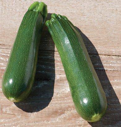 David's Garden Seeds Zucchini Partenon D2713 (Green) 25 Organic Hybrid Seeds