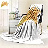 Decorative Throw Blanket Ultra-Plush Comfort ear of paddy ears of thai jasmine rice isolated on white background Soft, Colorful, Oversized | Home, Couch, Outdoor, Travel Use(60''x 50'')