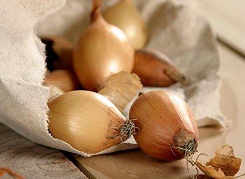 Onion Lyubchik Allium cepa mid-Early Seeds Vegetable Organic ERA from Ukraine 1 Gram