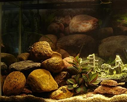 Amazon Com Forbidden City 30 Gallon Natural Aquarium Cave Rock