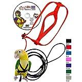 The AVIATOR Pet Bird Harness and Leash: Petite Green