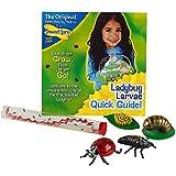 Ladybug Larvae Live Refill with Ladybug Life Cycle Stages