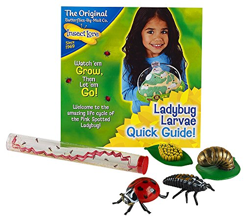 Insect Lore Live Baby Ladybug Larvae - Ladybug Growing Kit REFILL with Ladybug Life Cycle Toy Figurines