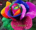 200pcs/pack Rare Holland Rainbow Rose Flower Seed Rose seeds Free Shipping