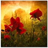 Trademark Fine Art Red for Love 2 by Philippe Sainte-Laudy Canvas Wall Art, 18x18-Inch