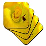 3dRose Sandy Mertens Flower Designs - Zucchini Flower With Bee - set of 4 Coasters - Soft (cst_6272_1)