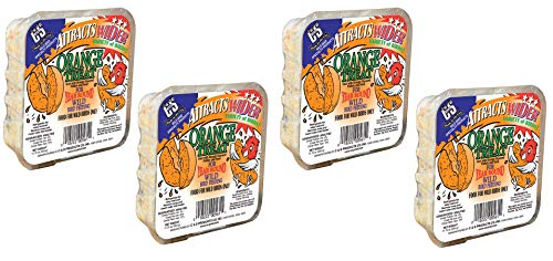 Cake Suet Orange - C&S Orange Treat Suet Cake for Year Round Wild Bird Feeding, 4 Pack