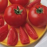 Burpee Bush Early Girl' Hybrid Tomato, 3 Live Plants   2 1/2'' Pot