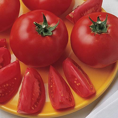 Burpee Bush Early Girl' Hybrid Tomato, 3 Live Plants | 2 1/2'' Pot by Burpee (Image #4)