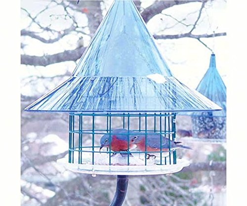 GC - Arundale - Sky Cafe Bluebird Feeder Arundale Sky Cafe Feeder