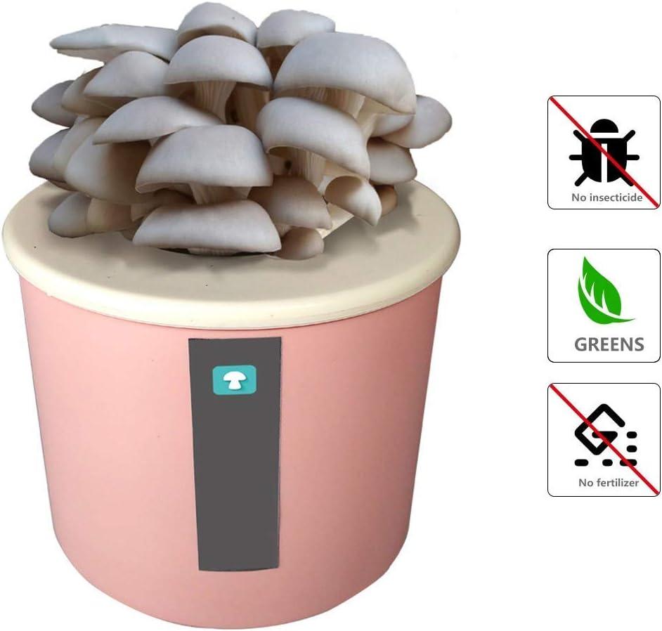 FCCD Kit de Cultivo de Hongos ostra, Micro Semillas de Hongos, esporas, engendro de Morchella Elata, bonsái para Interiores, Regalo de Bricolaje para Cultivar Hongos Gourmet