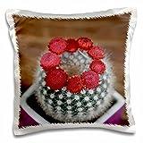 Edmond Hogge Jr – Flowers - Flowering Cactus - 16x16 inch Pillow Case (pc_214752_1)